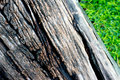 The wood slat on the green grass Royalty Free Stock Images