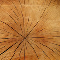 Wood Slice Royalty Free Stock Images