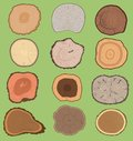 Wood slice texture wooden vector tree life age circle rings cut tree material. Set of tree slices wooden trunk natural Royalty Free Stock Photo