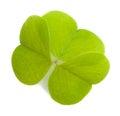 Wood sorrel leaf isolated on a white background Royalty Free Stock Photo