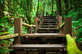 Wood stairs among green foliage leading across scenic tropical woods. Way through forest in summer season.
