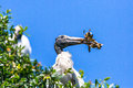 Wood stork nesting a gathers material Stock Photography