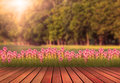 Wood terrace and tulip flower with green tree plan Royalty Free Stock Photo