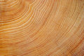 Wood texture close up Royalty Free Stock Photos