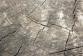Wood texture closeup cut log showing tree rings and cracks Royalty Free Stock Photography