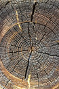 Wood texture of cut tree trunk close up cross section of tree trunk showing growth rings abstract stump crack Stock Photography