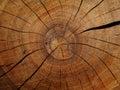 Wood texture detail closeup macro in brown color Stock Image