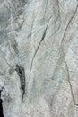Wood Texture Of Dry Tree Stump...