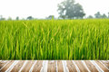 Wood Texture and Green rice field Royalty Free Stock Photo