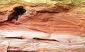 Wood texture macro Royalty Free Stock Photo