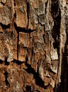 Wood texture 1 Royalty Free Stock Photo