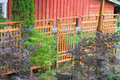 Wood Trellis Covering Red Barn Fencing Royalty Free Stock Photo
