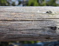 Wood truss grey and bright with wooden eyes Stock Photos
