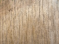 Wood veneer attacked by woodworm interesting for web graphics Royalty Free Stock Photos