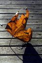 Wood yellow abstract brown in a leaf and the autumn Royalty Free Stock Photography