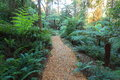 Woodchip path through gondwana rainforest a trail leading a forest blue mountains australia Royalty Free Stock Photos