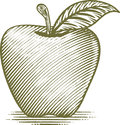 Woodcut apple style illustration of an Stock Photos