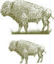 Woodcut Bison Royalty Free Stock Image