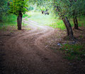 Wooded Avenue. Stock Photos
