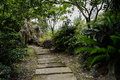 Wooded flagstone path in sunny summer Royalty Free Stock Photo