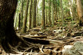 Wooded Hiking Trail Royalty Free Stock Photo