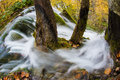Wooded stream water from a flowing around trees in autumn Stock Image
