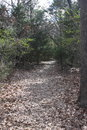 Wooded Trail in Texas. Royalty Free Stock Photo