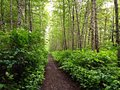 Wooded Trail Royalty Free Stock Photo
