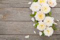 Wooden background with fresh rose flowers and copy space Stock Image