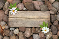 Wooden background and stone with flowers Royalty Free Stock Photo