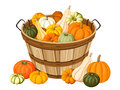 Wooden basket with pumpkins colorful isolated on a white background Royalty Free Stock Photography