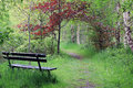 Wooden bench in beautiful open spot in forest in spring, paradise Royalty Free Stock Photo