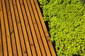 Wooden bench with hedge next to it Royalty Free Stock Photos