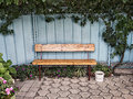 Wooden bench near the fence with ivy Royalty Free Stock Photo