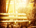 Wooden bench in the park beautiful bright yellow sun light place for resting peaceful morning summer time Stock Images