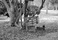Wooden bench park like setting under an oak tree leaves on the ground in springtime done in b w Stock Image