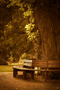 Wooden bench in park a peaceful quiet autumn Royalty Free Stock Photos