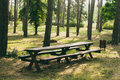 Wooden bench in a pine forest Royalty Free Stock Images