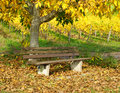 Wooden bench under tree in autumn a with colorful foliage and a vineyard the background Royalty Free Stock Photography