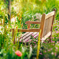 Wooden Bench in a wildflower garden. Royalty Free Stock Photo