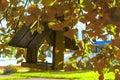 Wooden bird feeder among the yellow fall foliage.