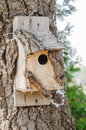 Wooden bird house on a tree close up Royalty Free Stock Photography