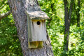 Wooden birdhouse in the forest old on a tree Royalty Free Stock Photo