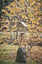 Wooden birds feeder home for Royalty Free Stock Photo