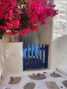A blue garden gate surrounded by bouganvillea at the Greek island of Sikinos. Royalty Free Stock Photo