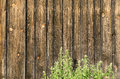Wooden boards and green stinging nettles as background Royalty Free Stock Photo
