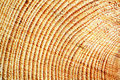 Wooden boards the new close up Royalty Free Stock Photos