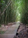 Wooden boardwalk path through dense bamboo forest, leading to famous Waimoku Falls. Popular Pipiwai trail in Haleakala National Pa Royalty Free Stock Photo