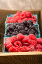Wooden box with baskets of berries a red raspberries and black raspberries Royalty Free Stock Photo