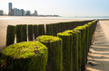 Wooden breakwater on a dutch beach double row of poles covered with seaweed the of the city of flushing Royalty Free Stock Photography